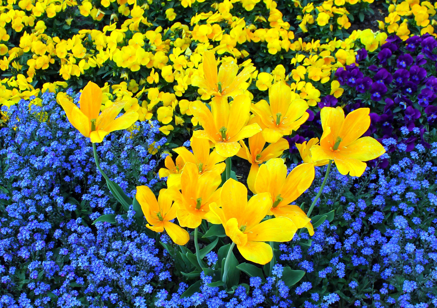 квіти україни фото